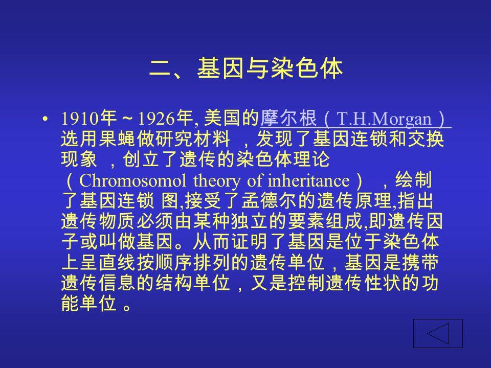 二、基因与染色体 1910 年~ 1926 年, 美国的摩尔根( T.H.Morgan ) 选用果蝇做研究材料 ,发现了基因连锁和交换 现象 ,创立了遗传的染色体理论 ( Chromosomol theory of inheritance ) ,绘制 了基因连锁 图, 接受了孟德尔的遗传原理, 指出