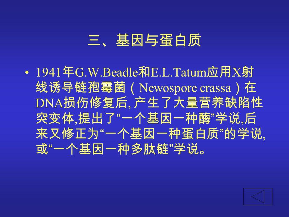 """三、基因与蛋白质 1941 年 G.W.Beadle 和 E.L.Tatum 应用 X 射 线诱导链孢霉菌( Newospore crassa )在 DNA 损伤修复后, 产生了大量营养缺陷性 突变体, 提出了 """" 一个基因一种酶 """" 学说, 后 来又修正为 """" 一个基因一种蛋白质 """" 的学说, 或"""