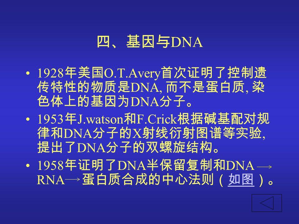 四、基因与 DNA 1928 年美国 O.T.Avery 首次证明了控制遗 传特性的物质是 DNA, 而不是蛋白质, 染 色体上的基因为 DNA 分子。 1953 年 J.watson 和 F.Crick 根据碱基配对规 律和 DNA 分子的 X 射线衍射图谱等实验, 提出了 DNA 分子的双螺旋结