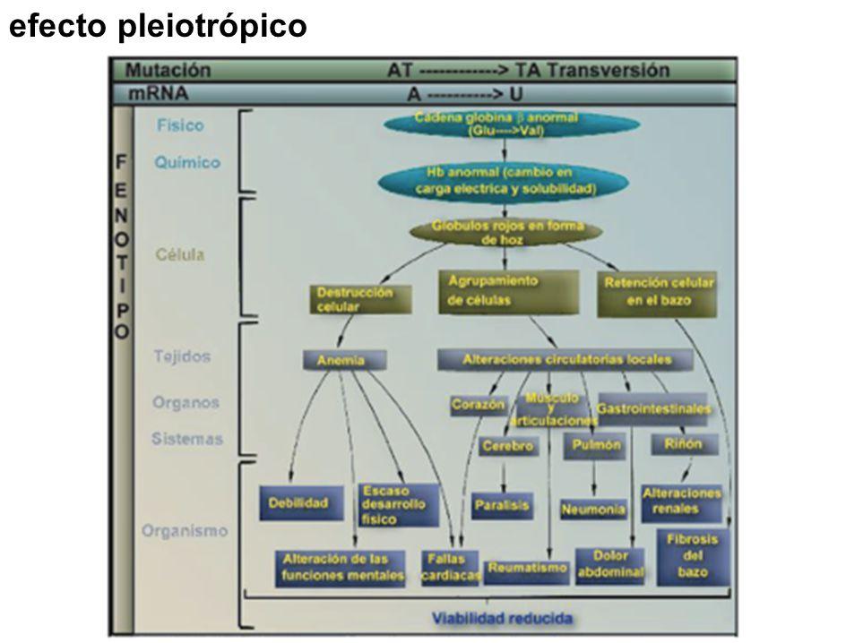 efecto pleiotrópico