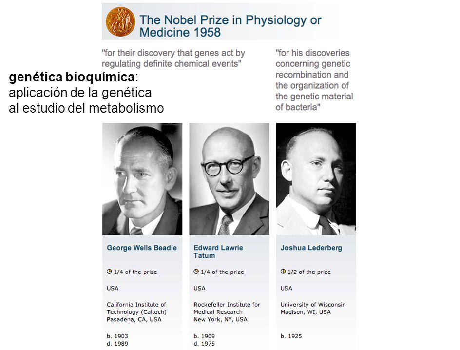 genética bioquímica: aplicación de la genética al estudio del metabolismo
