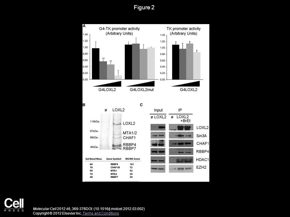 Figure 2 Molecular Cell 2012 46, 369-376DOI: (10.1016/j.molcel.2012.03.002) Copyright © 2012 Elsevier Inc.