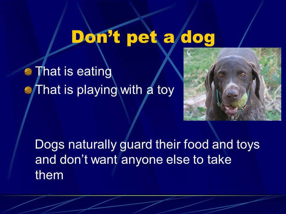 Don't pet a dog That is eating That is playing with a toy Dogs naturally guard their food and toys and don't want anyone else to take them