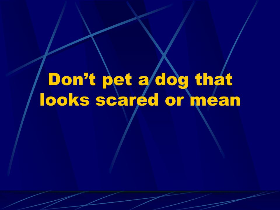 Don't pet a dog that looks scared or mean
