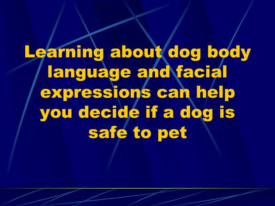 Learning about dog body language and facial expressions can help you decide if a dog is safe to pet