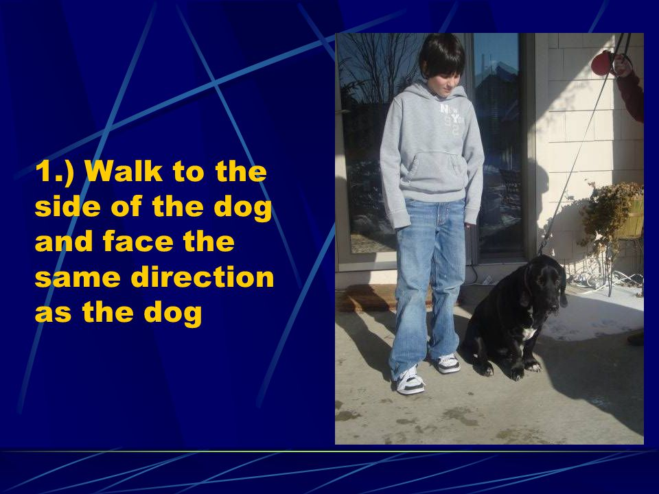 1.) Walk to the side of the dog and face the same direction as the dog