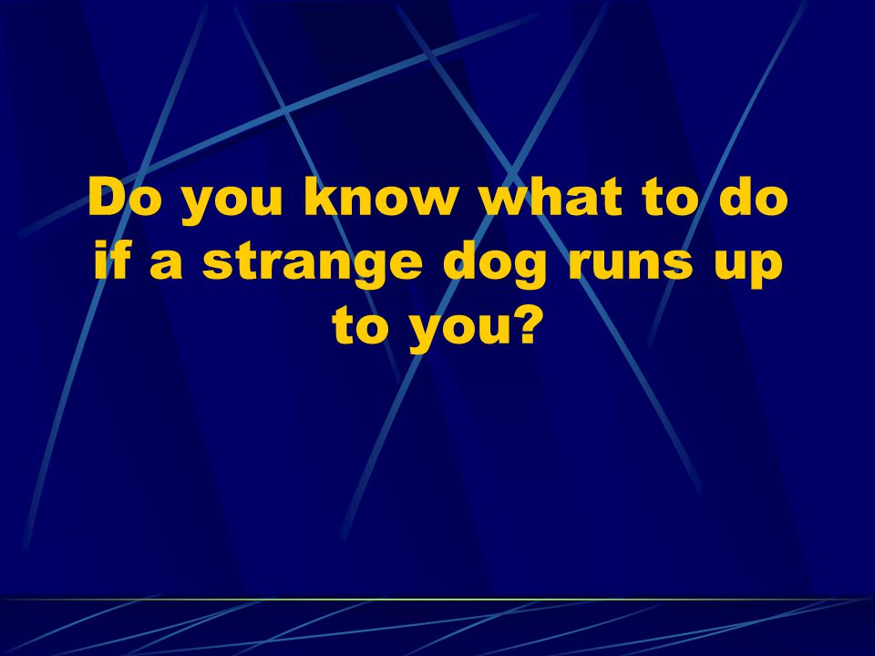 Do you know what to do if a strange dog runs up to you