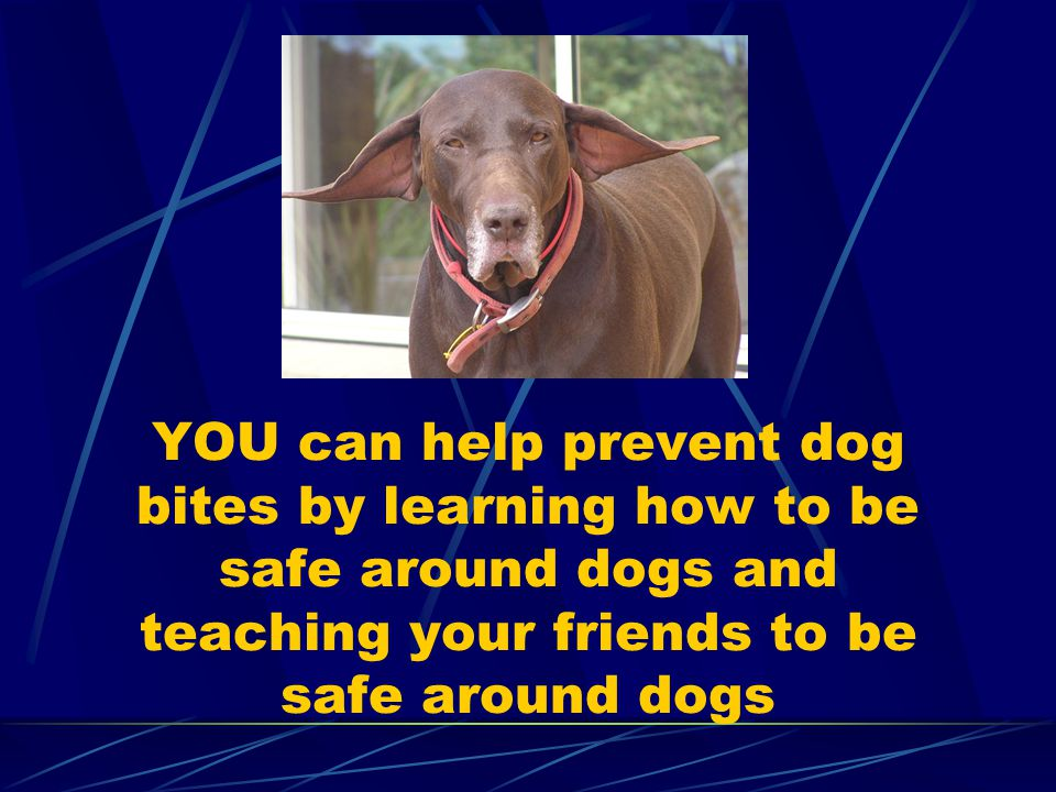 YOU can help prevent dog bites by learning how to be safe around dogs and teaching your friends to be safe around dogs