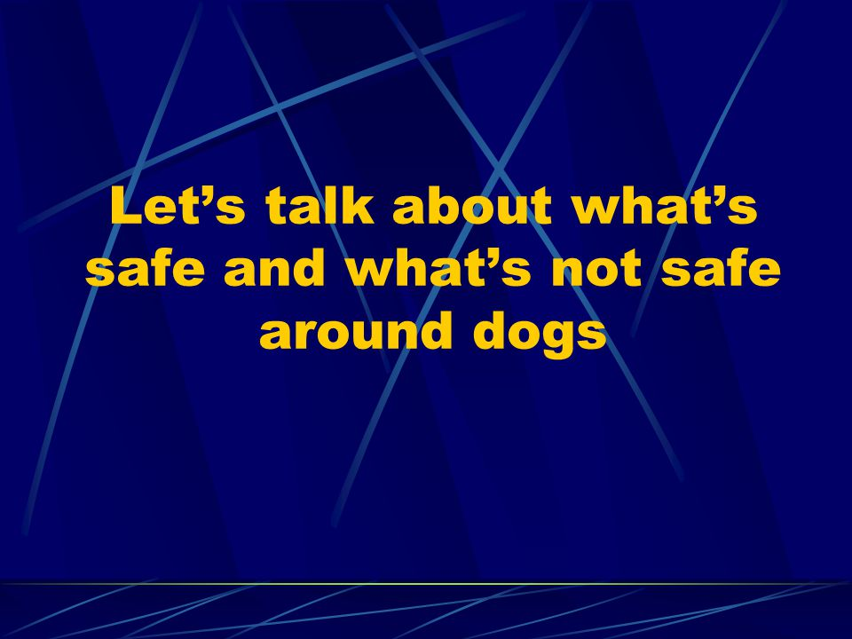 Let's talk about what's safe and what's not safe around dogs