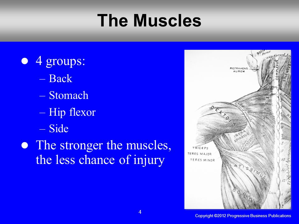 Copyright ©2012 Progressive Business Publications 4 The Muscles 4 groups: –Back –Stomach –Hip flexor –Side The stronger the muscles, the less chance of injury