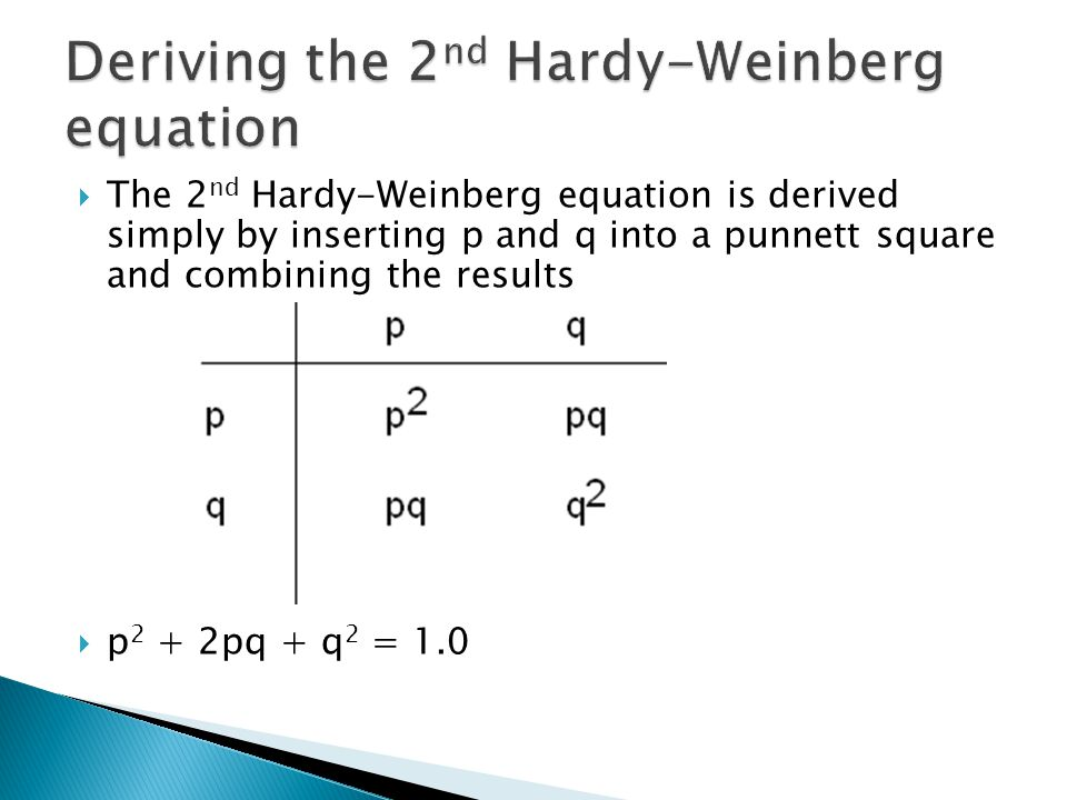  The 2 nd Hardy-Weinberg equation is derived simply by inserting p and q into a punnett square and combining the results  p 2 + 2pq + q 2 = 1.0