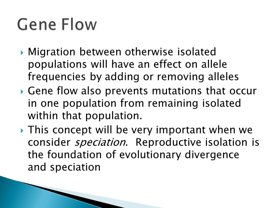  Migration between otherwise isolated populations will have an effect on allele frequencies by adding or removing alleles  Gene flow also prevents mutations that occur in one population from remaining isolated within that population.