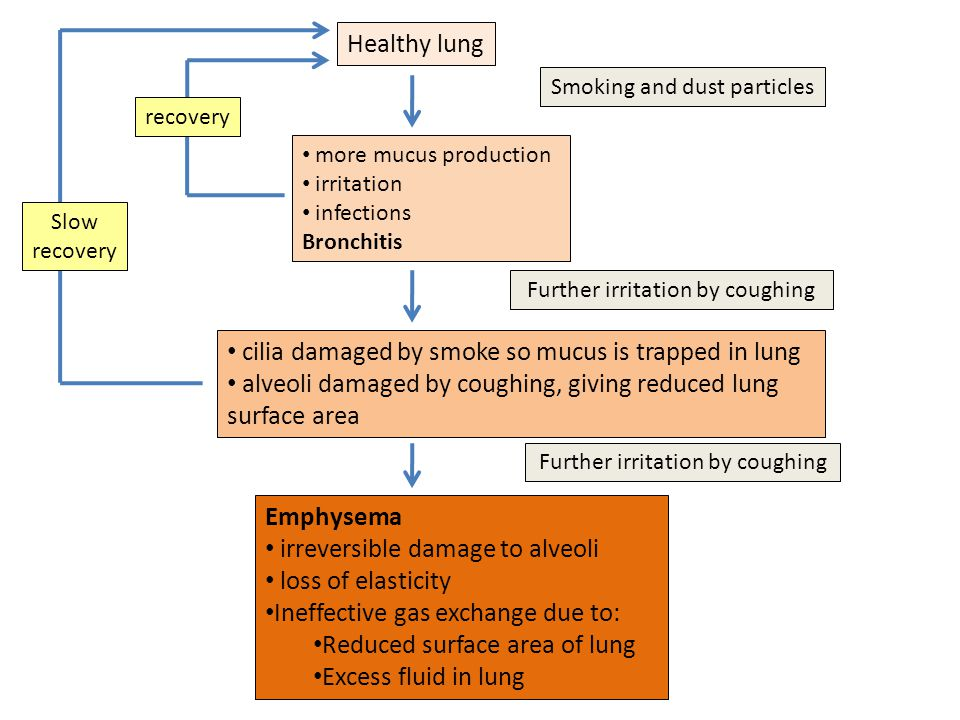 Healthy lung Smoking and dust particles more mucus production irritation infections Bronchitis cilia damaged by smoke so mucus is trapped in lung alveoli damaged by coughing, giving reduced lung surface area Emphysema irreversible damage to alveoli loss of elasticity Ineffective gas exchange due to: Reduced surface area of lung Excess fluid in lung Further irritation by coughing Slow recovery