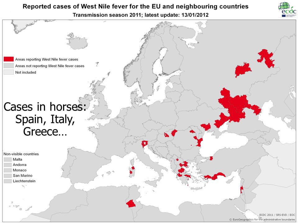 Cases in horses: Spain, Italy, Greece…