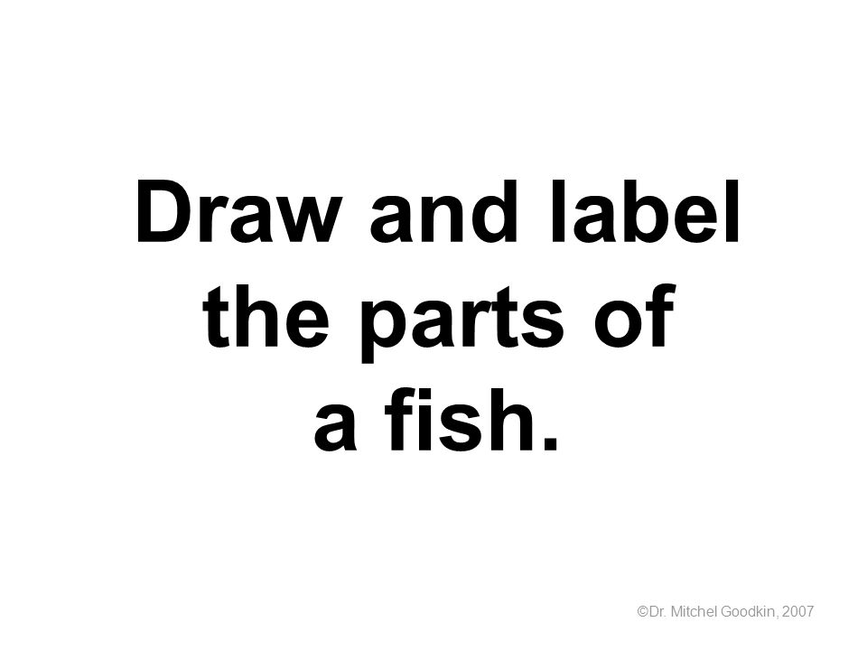Draw and label the parts of a fish.