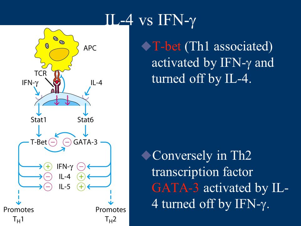 IL-4 vs IFN-   T-bet (Th1 associated) activated by IFN-  and turned off by IL-4.