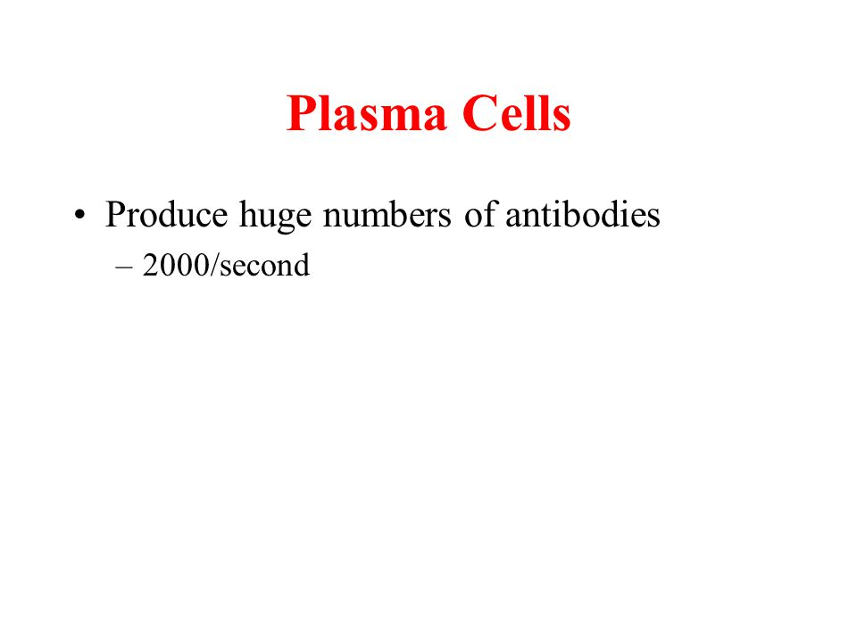 Plasma Cells Produce huge numbers of antibodies –2000/second