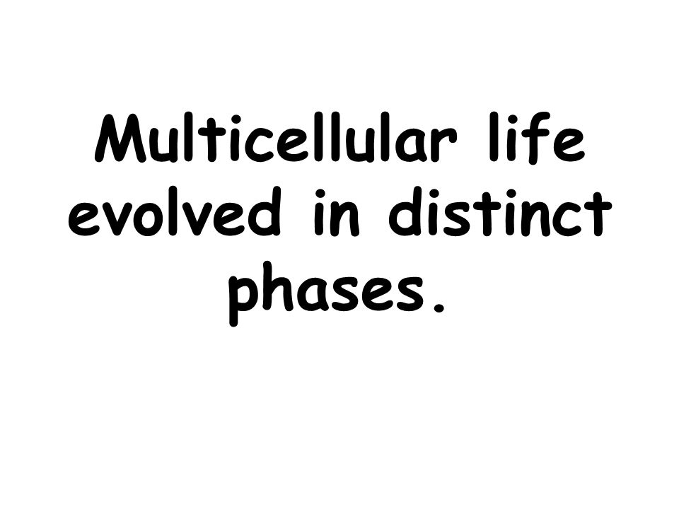 Multicellular life evolved in distinct phases.