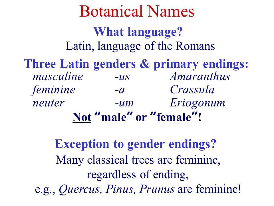 Botanical Names What Language