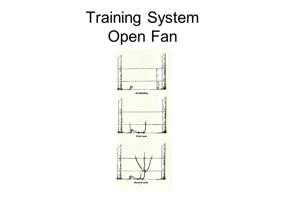 Training System Open Fan