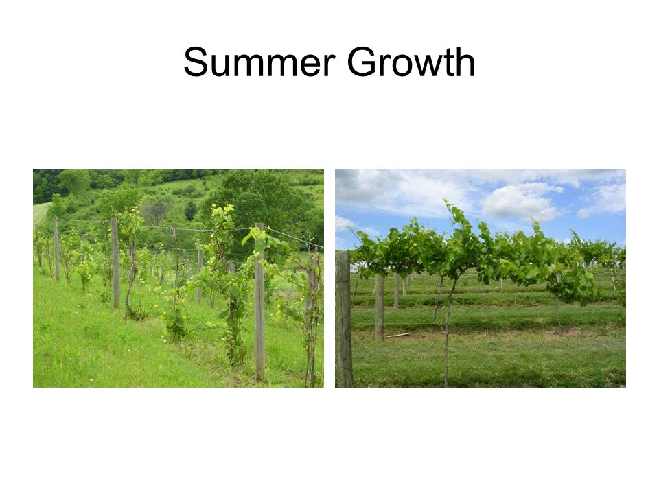 Summer Growth