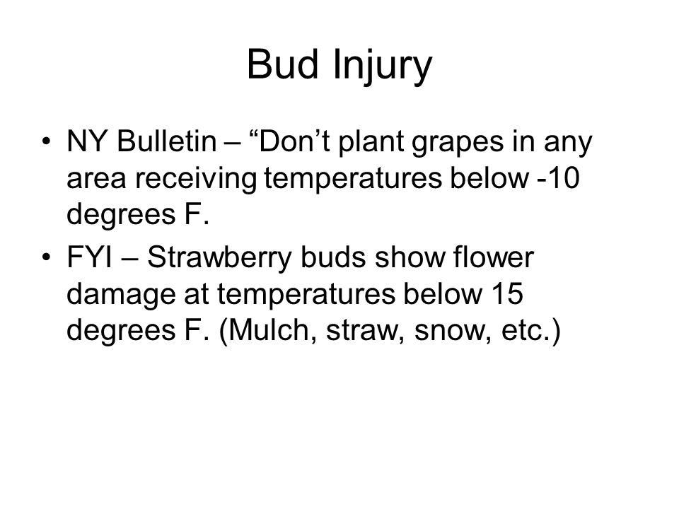 Bud Injury NY Bulletin – Don't plant grapes in any area receiving temperatures below -10 degrees F.