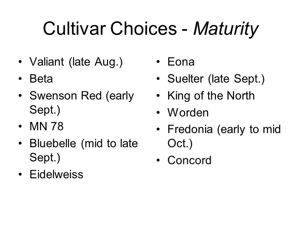 Cultivar Choices - Maturity Valiant (late Aug.) Beta Swenson Red (early Sept.) MN 78 Bluebelle (mid to late Sept.) Eidelweiss Eona Suelter (late Sept.) King of the North Worden Fredonia (early to mid Oct.) Concord