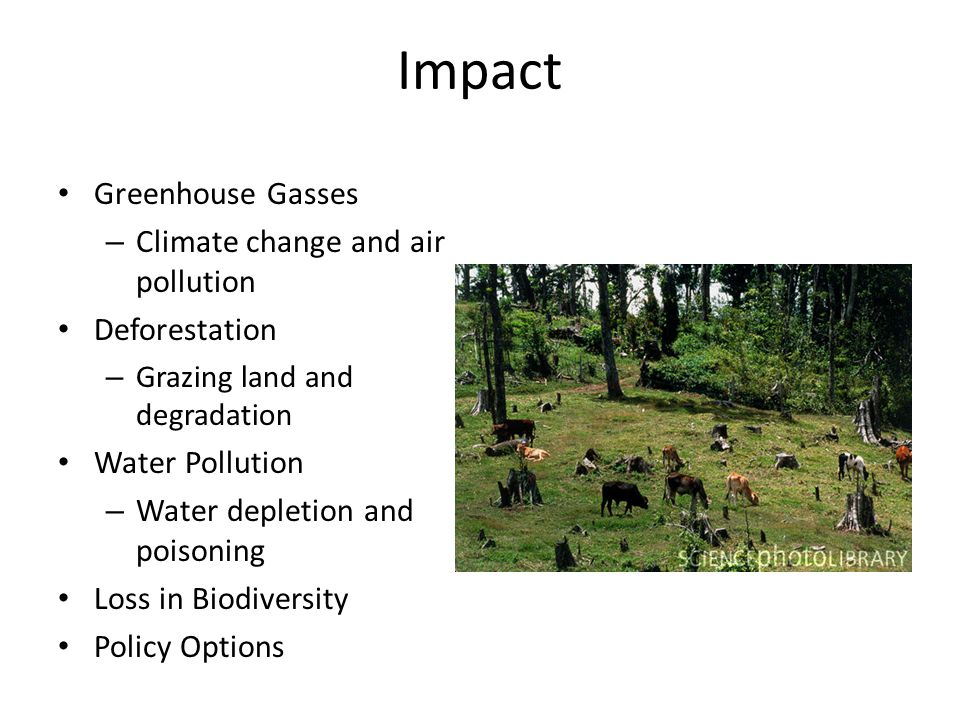 Impact Greenhouse Gasses – Climate change and air pollution Deforestation – Grazing land and degradation Water Pollution – Water depletion and poisoning Loss in Biodiversity Policy Options