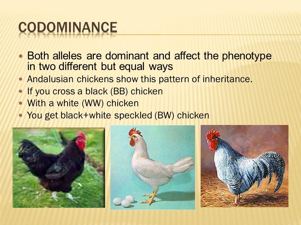 chicken genetics worksheet answers