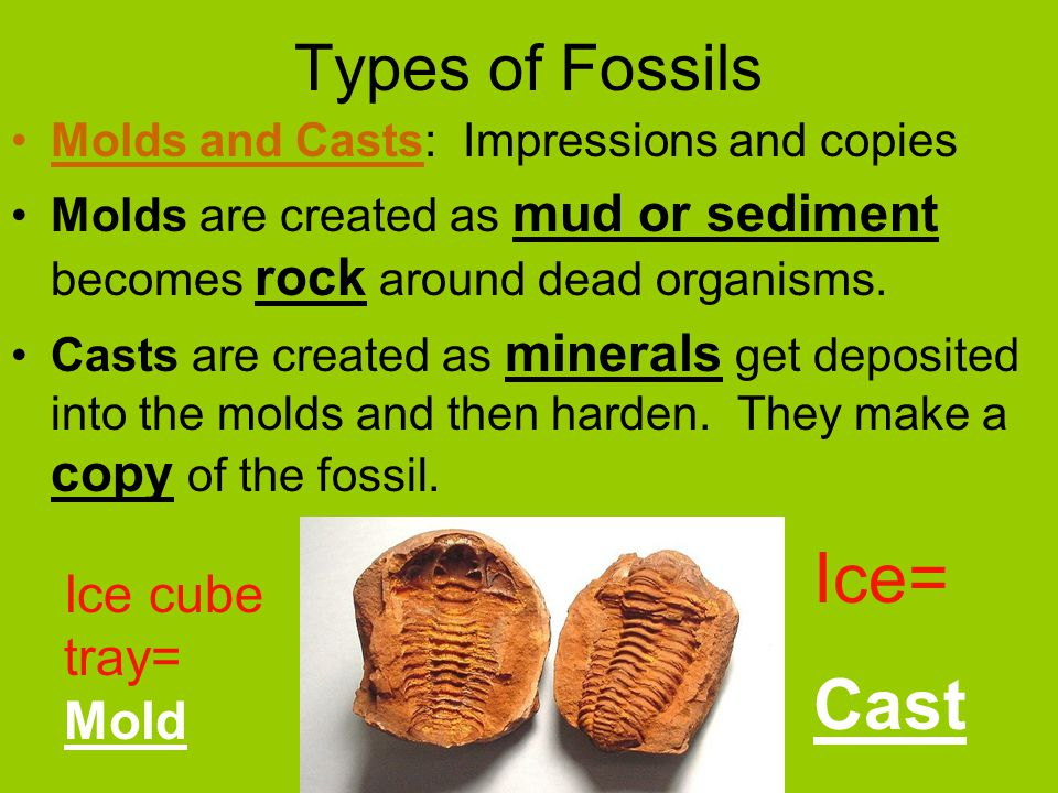 Types of Fossils Molds and Casts: Impressions and copies Molds are created as mud or sediment becomes rock around dead organisms.