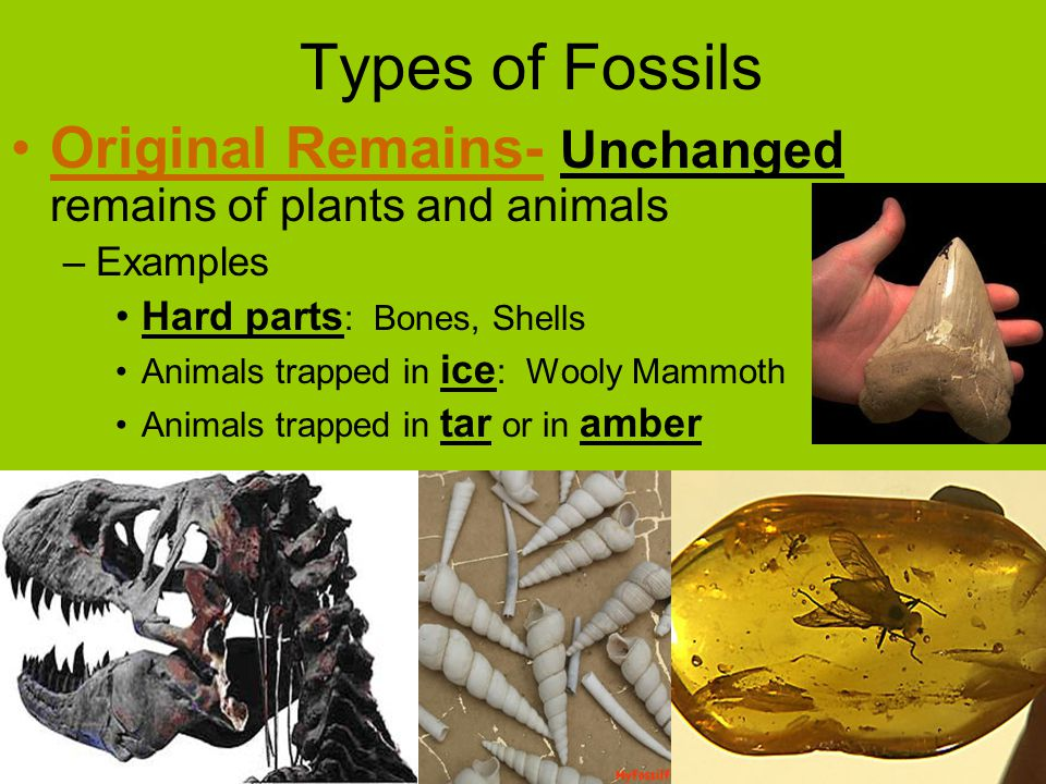 Types of Fossils Original Remains- Unchanged remains of plants and animals –Examples Hard parts : Bones, Shells Animals trapped in ice : Wooly Mammoth Animals trapped in tar or in amber