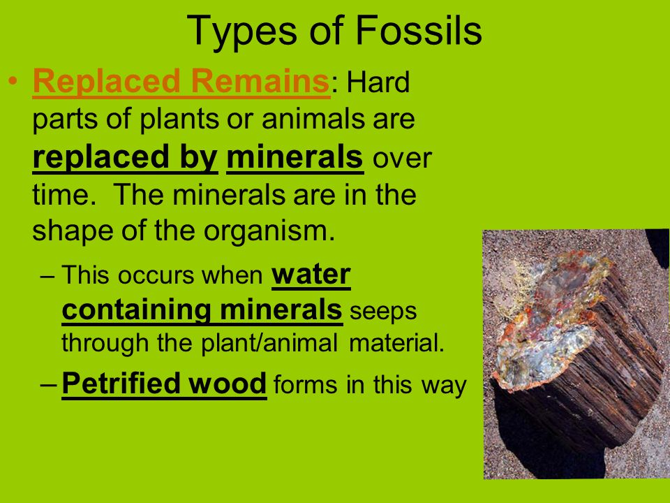 Types of Fossils Replaced Remains : Hard parts of plants or animals are replaced by minerals over time.
