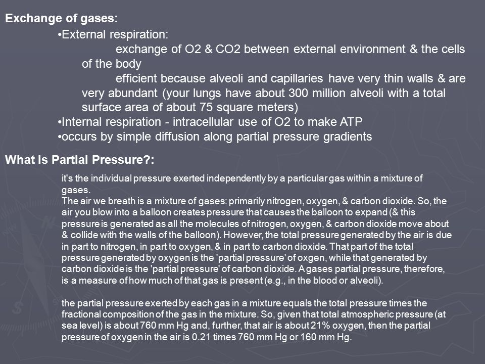 Exchange of gases: External respiration: exchange of O2 & CO2 between external environment & the cells of the body efficient because alveoli and capillaries have very thin walls & are very abundant (your lungs have about 300 million alveoli with a total surface area of about 75 square meters) Internal respiration - intracellular use of O2 to make ATP occurs by simple diffusion along partial pressure gradients What is Partial Pressure : it s the individual pressure exerted independently by a particular gas within a mixture of gases.
