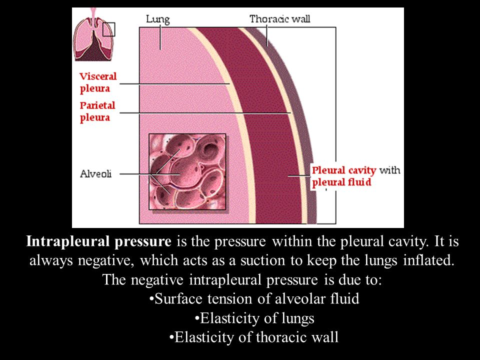 Intrapleural pressure is the pressure within the pleural cavity.