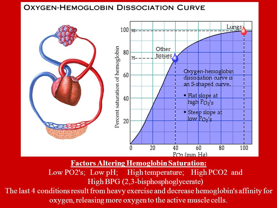 Factors Altering Hemoglobin Saturation: Low PO2 s; Low pH; High temperature; High PCO2 and High BPG (2,3-bisphosphoglycerate) The last 4 conditions result from heavy exercise and decrease hemoglobin s affinity for oxygen, releasing more oxygen to the active muscle cells.