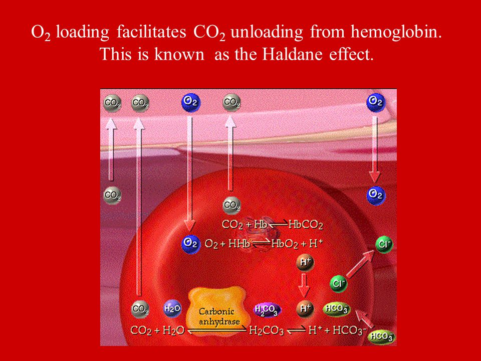 O 2 loading facilitates CO 2 unloading from hemoglobin. This is known as the Haldane effect.