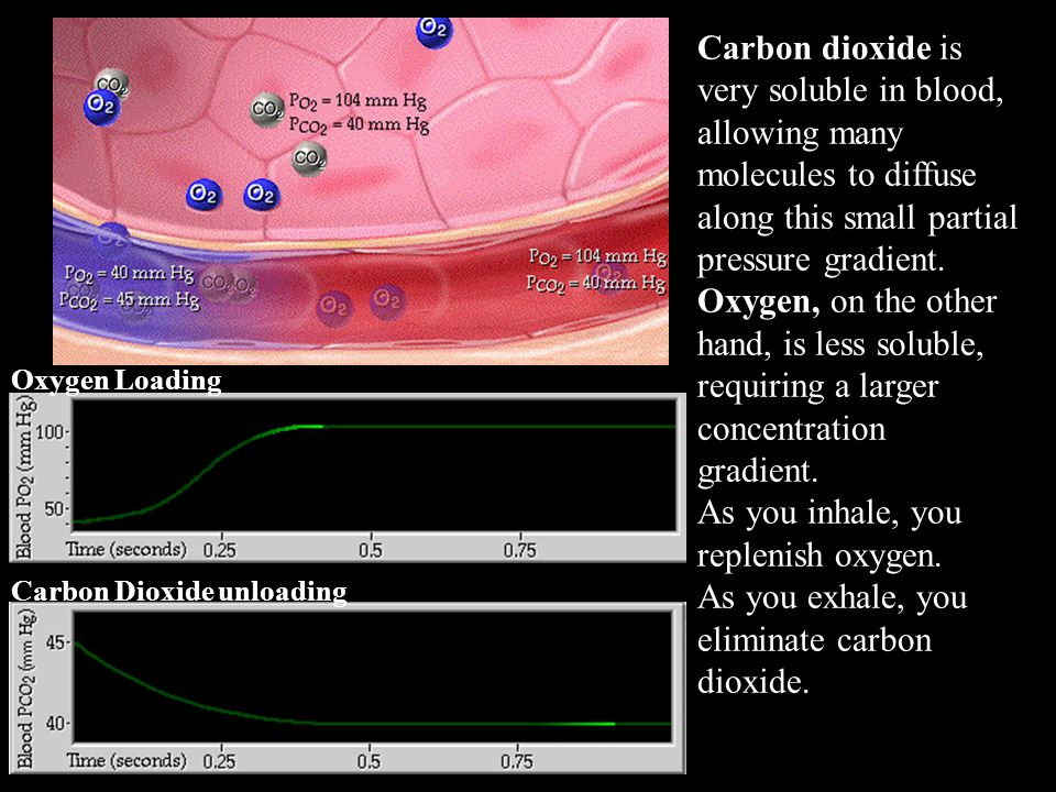 Carbon dioxide is very soluble in blood, allowing many molecules to diffuse along this small partial pressure gradient.