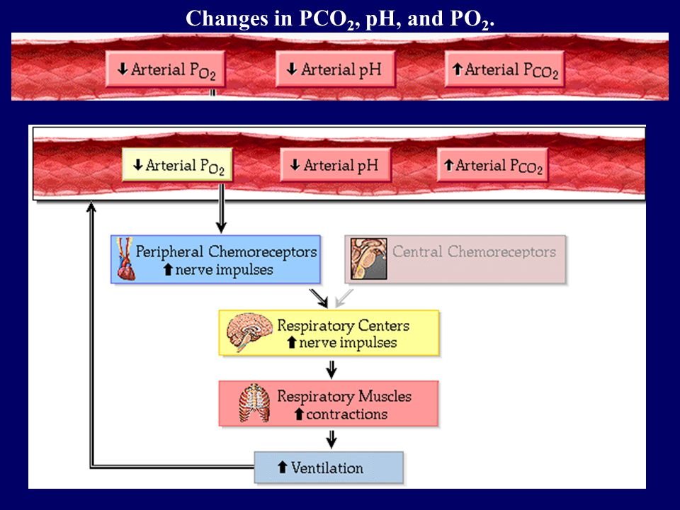 Changes in PCO 2, pH, and PO 2.