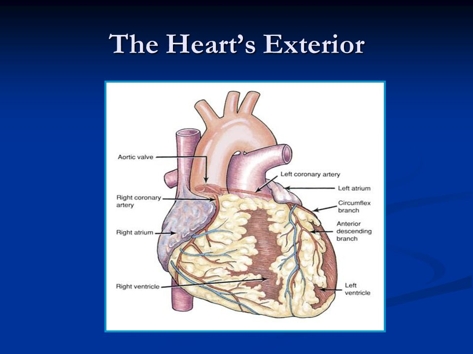 2 Circulatory System