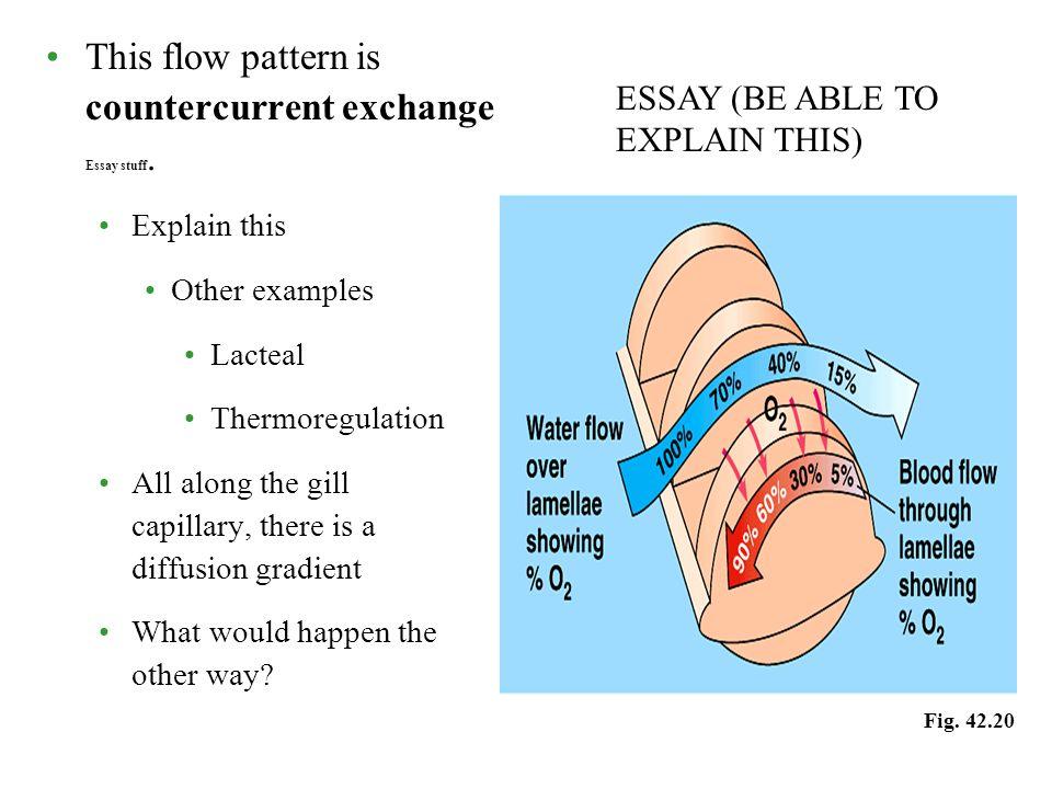 respiratory essay