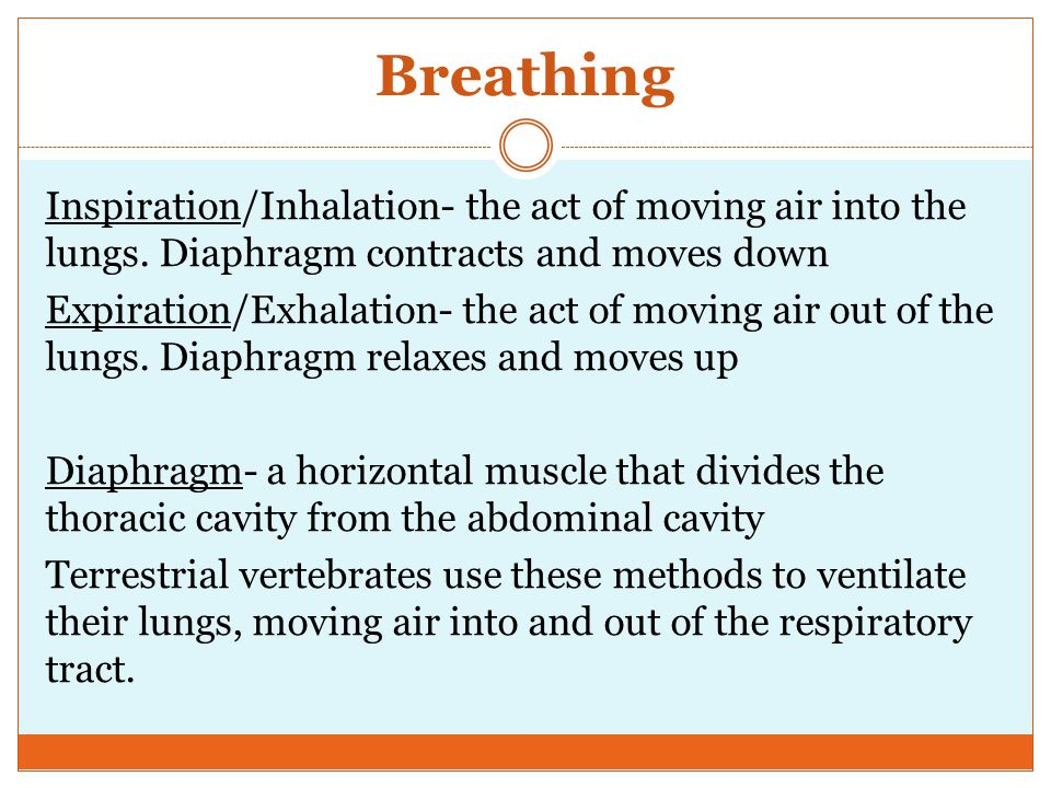 Breathing Inspiration/Inhalation- the act of moving air into the lungs.
