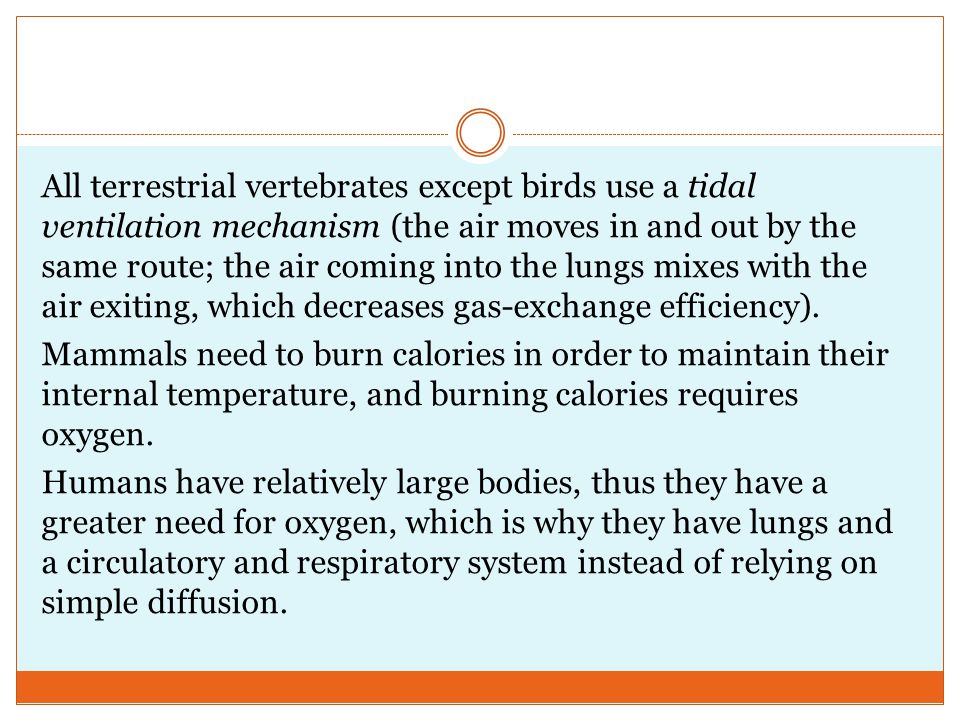All terrestrial vertebrates except birds use a tidal ventilation mechanism (the air moves in and out by the same route; the air coming into the lungs mixes with the air exiting, which decreases gas-exchange efficiency).