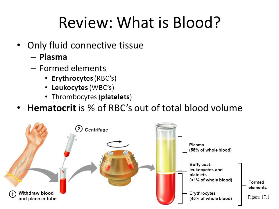 Image result for blood plasma and formed elements