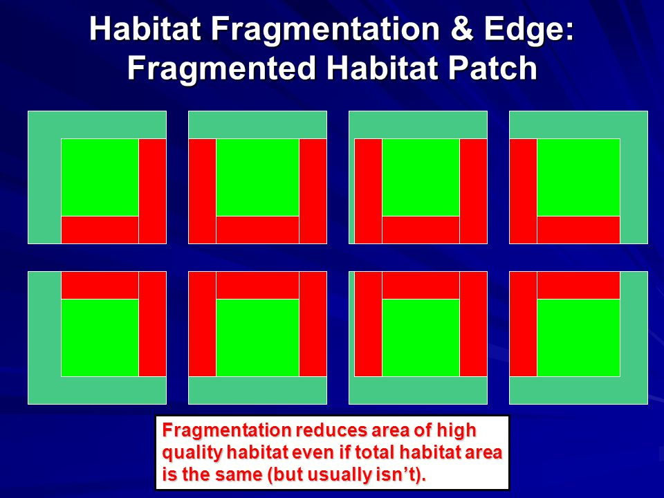 Habitat Fragmentation & Edge: Fragmented Habitat Patch Fragmentation reduces area of high quality habitat even if total habitat area is the same (but usually isn't).