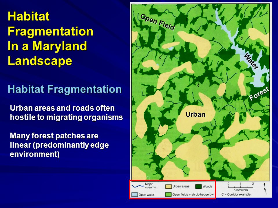 Habitat Fragmentation In a Maryland Landscape Urban areas and roads often hostile to migrating organisms Many forest patches are linear (predominantly edge environment) Habitat Fragmentation Urban Forest Water Open Field