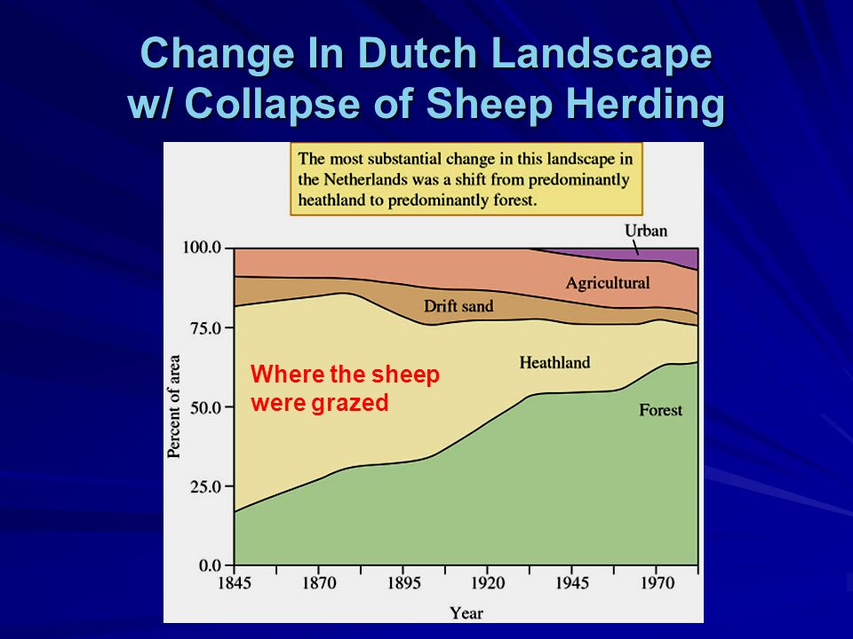 Change In Dutch Landscape w/ Collapse of Sheep Herding Where the sheep were grazed