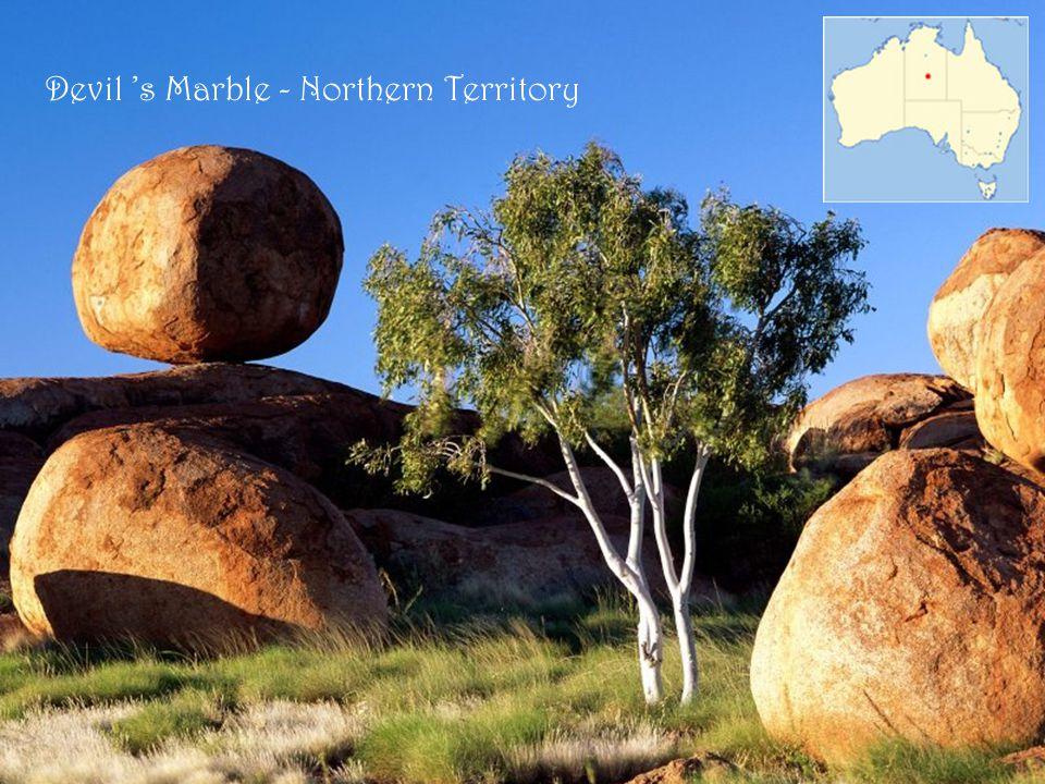 Spinifex - vegetazione dell 'Outback