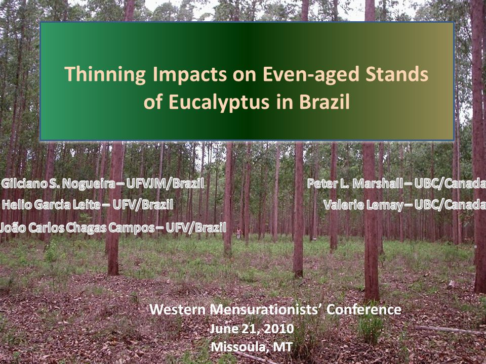 Thinning Impacts on Even-aged Stands of Eucalyptus in Brazil Thinning Impacts on Even-aged Stands of Eucalyptus in Brazil June 21, 2010 Missoula, MT Western Mensurationists' Conference