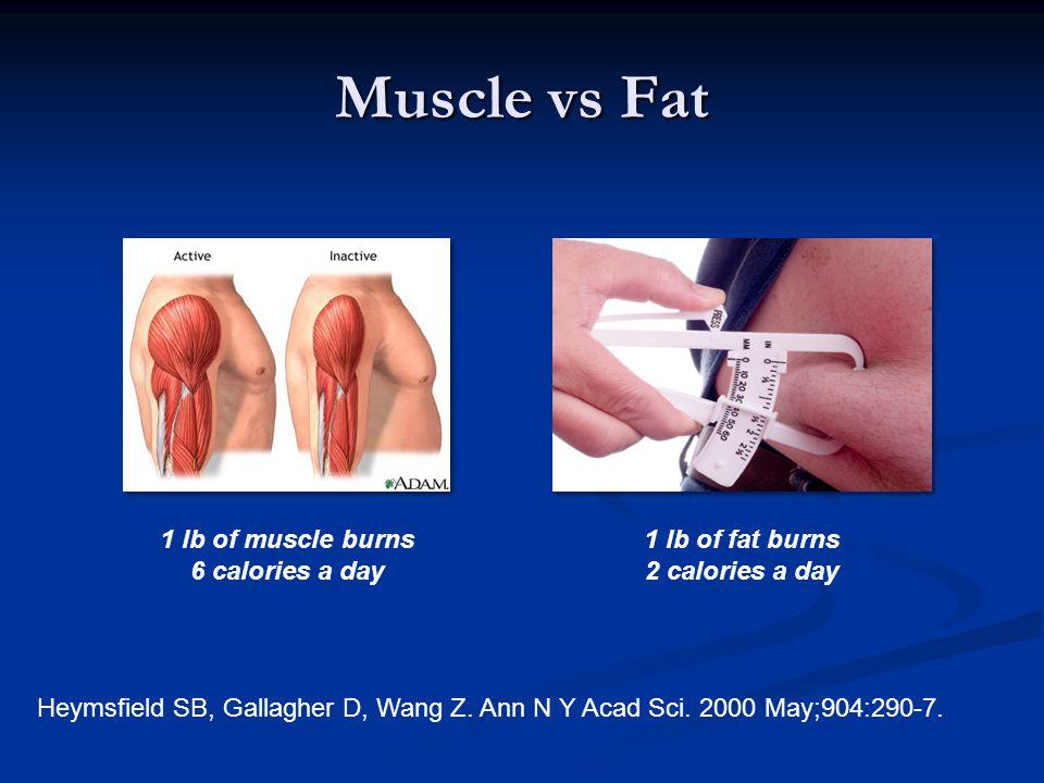 Muscle vs Fat 1 lb of muscle burns 6 calories a day 1 lb of fat burns 2 calories a day Heymsfield SB, Gallagher D, Wang Z.