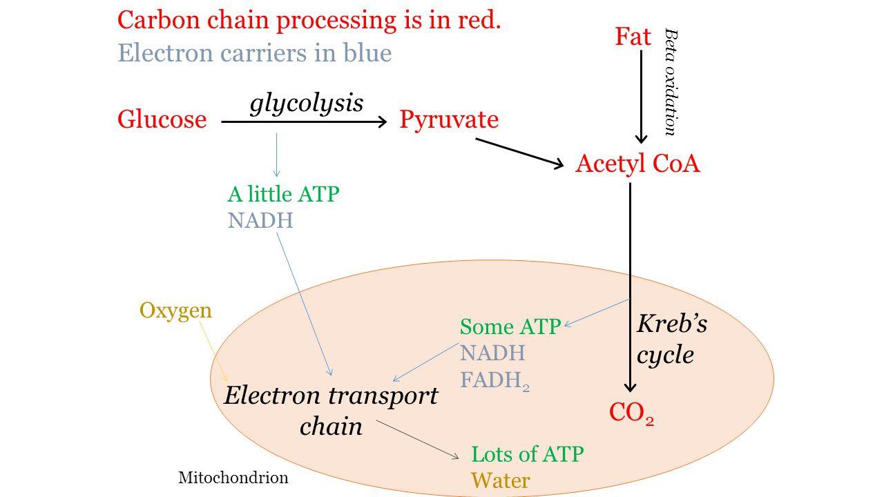 Obesity and energy balance key skills define obesity and body 20 glucose glycolysis pooptronica Choice Image